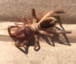 mk-spider